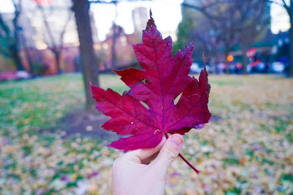 Top Things To Do In Montreal Canada - Fall Leaf Red